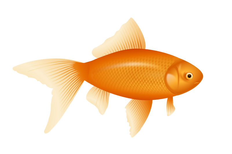 graphic library stock Goldfish clipart isda. Simple free on dumielauxepices