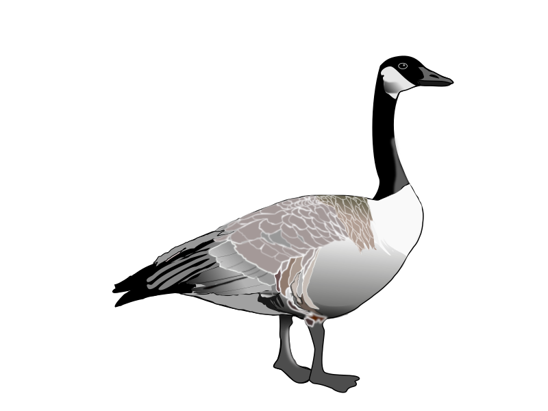 banner royalty free library Goose clipart. Canadian medium image png