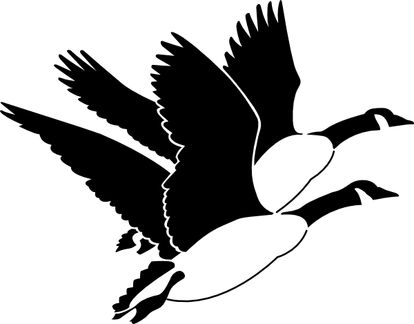 image library stock Panda free images clip. Goose clipart black and white