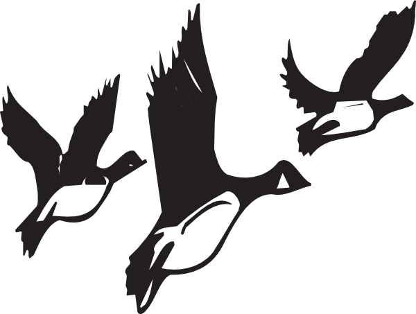 image library stock Goose clipart black and white. Panda free images clip