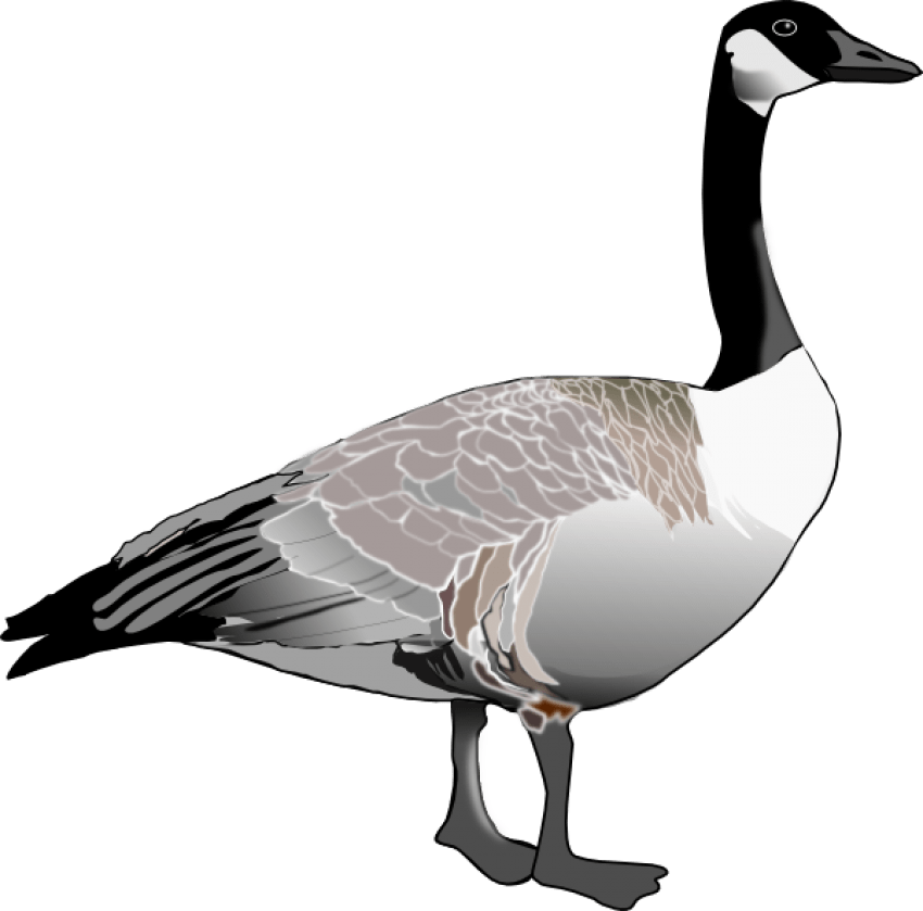 clip art black and white library Goose clipart grey goose. Png free images toppng