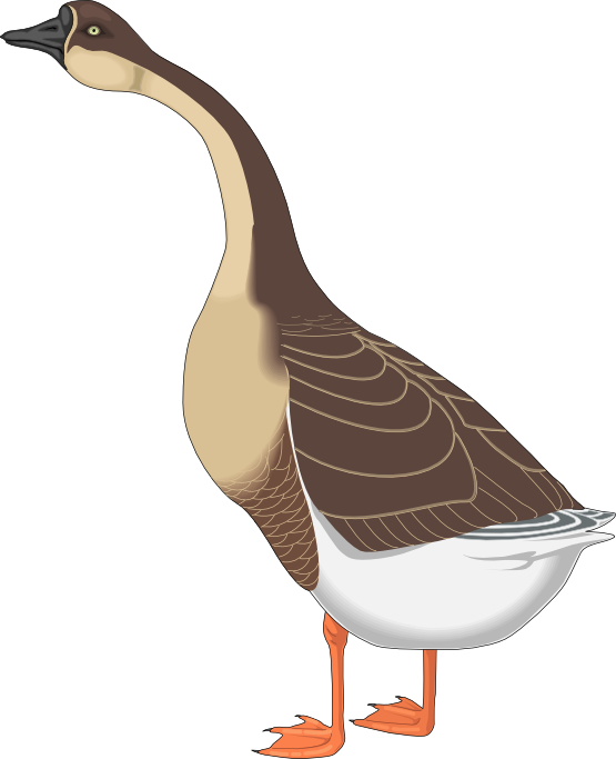 image download Cilpart sensational inspiration ideas. Goose clipart marsh