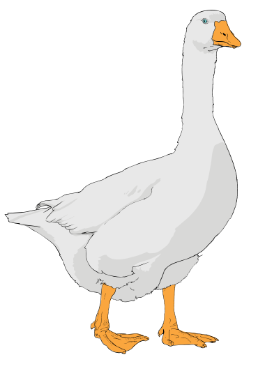 graphic royalty free File svg wikipedia filegoose. Goose clipart