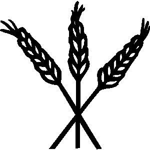 vector black and white stock Grain clipart. Pix for barley hops.