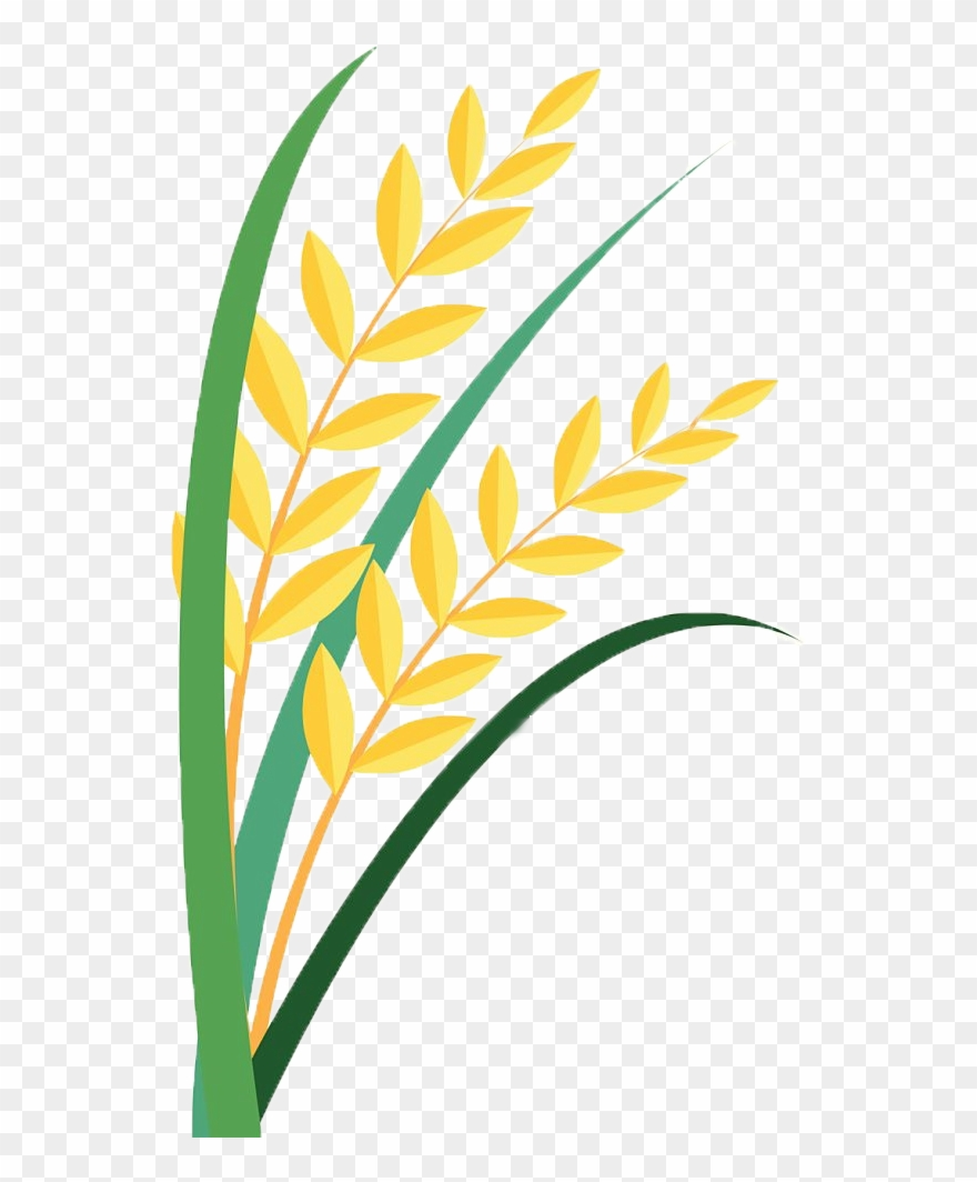 clipart free Paddy clip art png. Grain clipart.