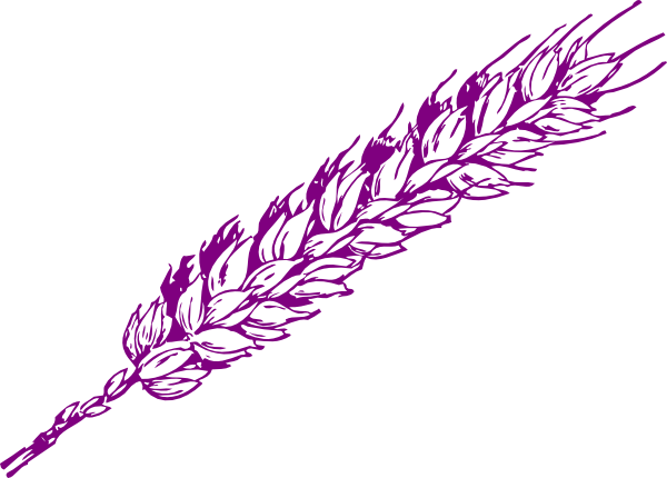 jpg transparent download Grain clipart feather. Purple wheat clip art