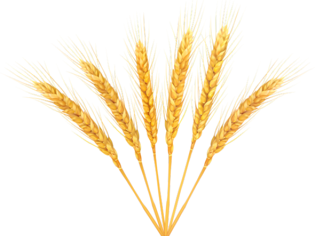 vector library library Free on dumielauxepices net. Grain clipart malt