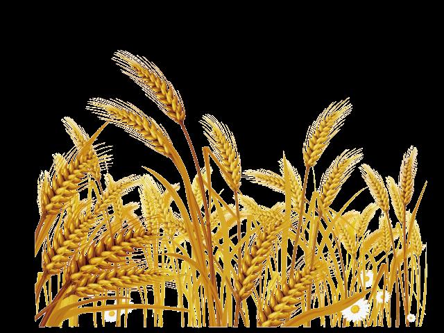 image free stock Grain clipart malt. Tree free on dumielauxepices