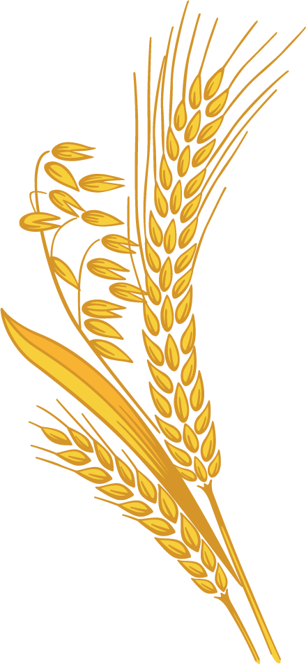 image black and white stock Grain clipart transparent. Wheat png images free