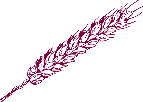 vector free stock Wheat Drawing at GetDrawings