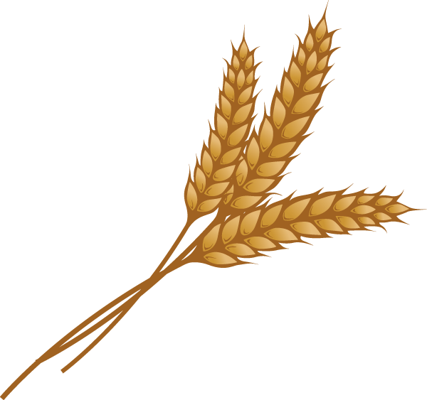 image freeuse Grains seed free on. Clipart wheat