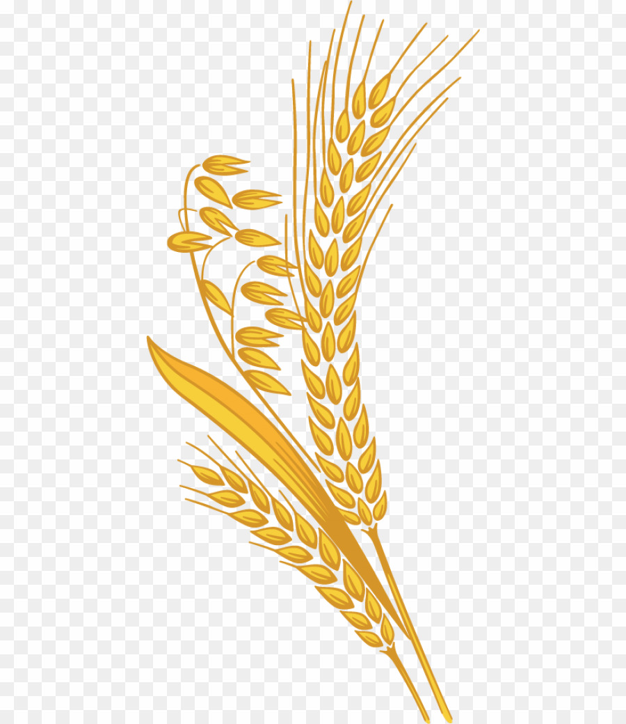svg freeuse download Rice grain png cereal. Grains clipart cerial