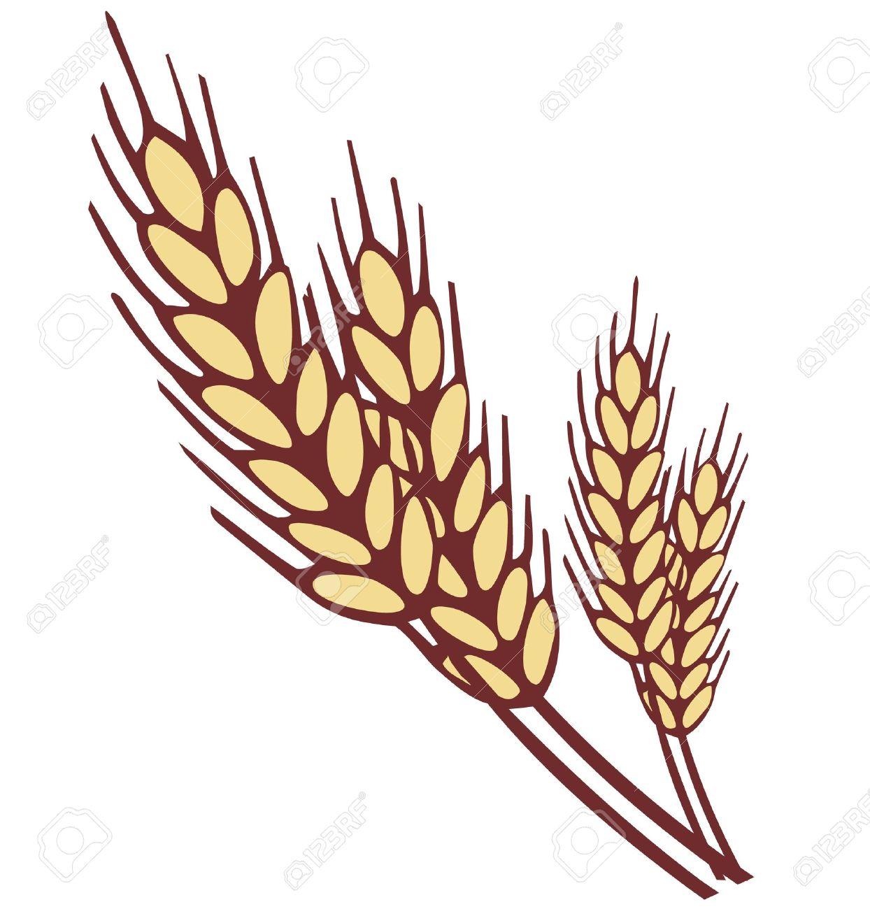 svg library download Grains clipart oats.  grain free clip