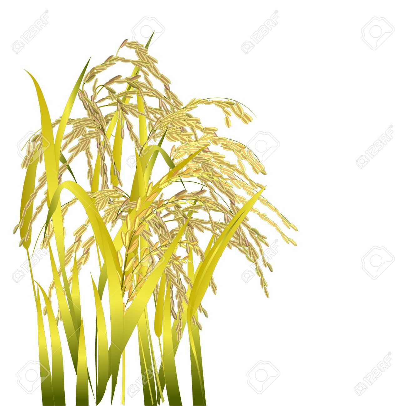 picture Station . Grains clipart palay