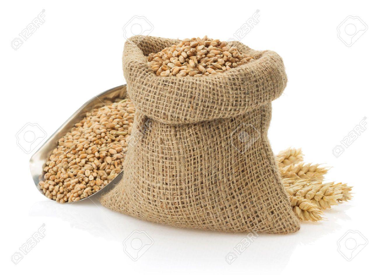 banner stock Flour pencil and in. Grains clipart sack grain