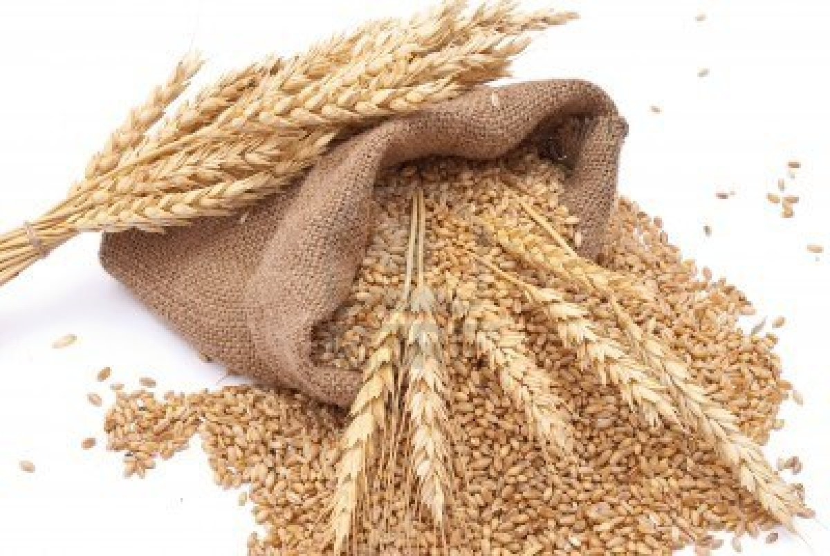 banner royalty free Free wheat download clip. Grains clipart sack grain