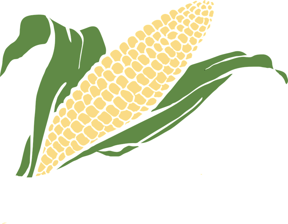clip art library download Grains clipart starch. Grain corn free on