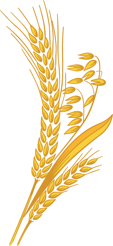 clipart royalty free stock Grain harvest pencil and. Grains clipart wheat crop