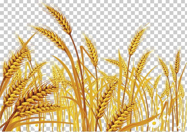 clip art transparent Download for free png. Grains clipart wheat crop