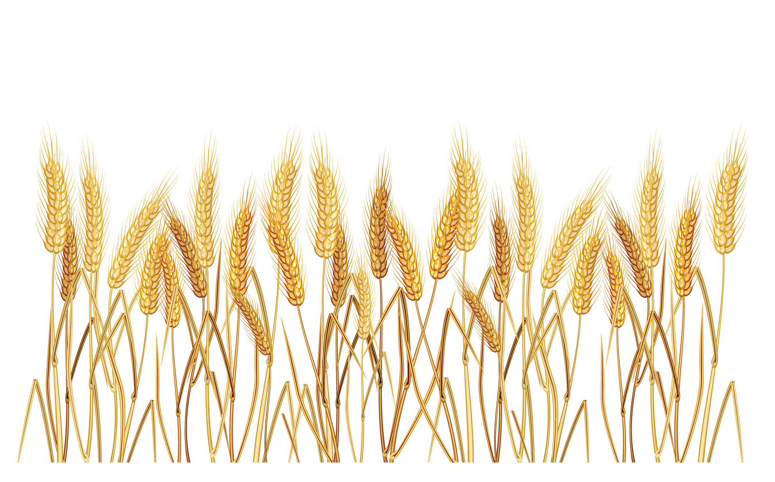 png library Wheat border clipart. Grains farming free on
