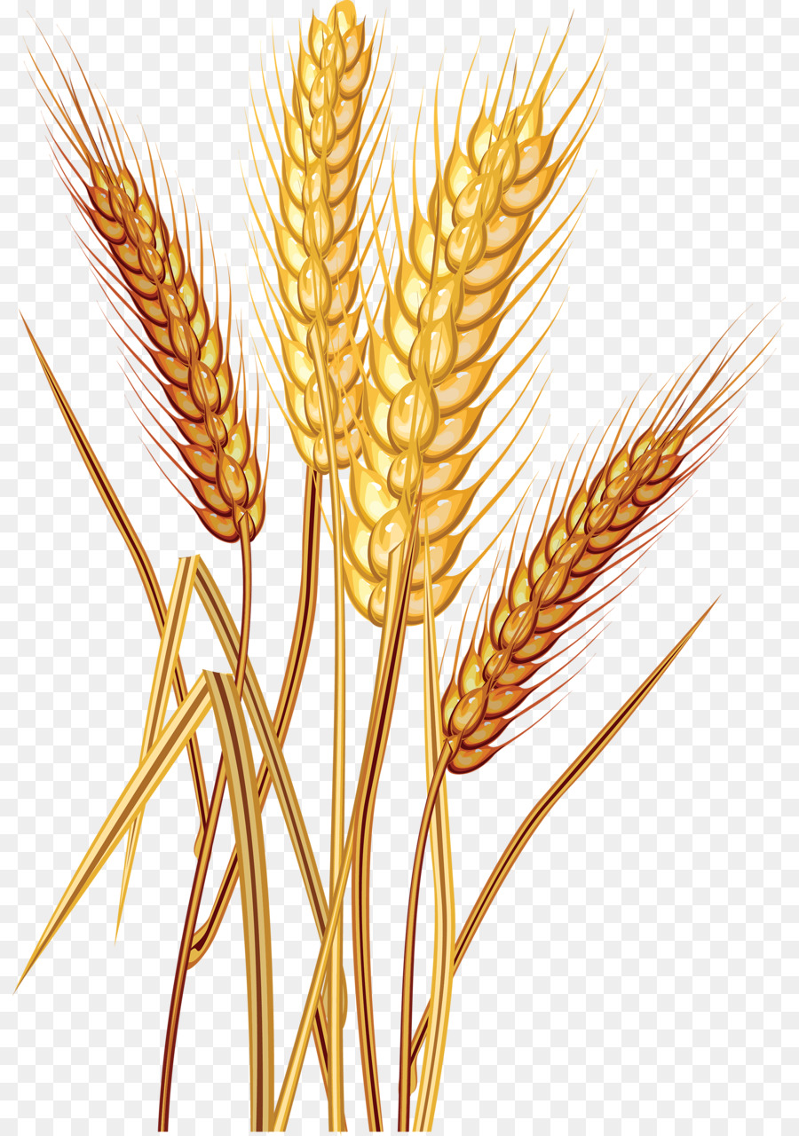 clip art free library Cartoon food transparent clip. Clipart wheat