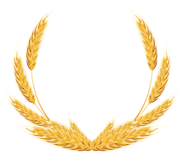 clipart royalty free stock Decoration png image fundal. Grains clipart wheat plant