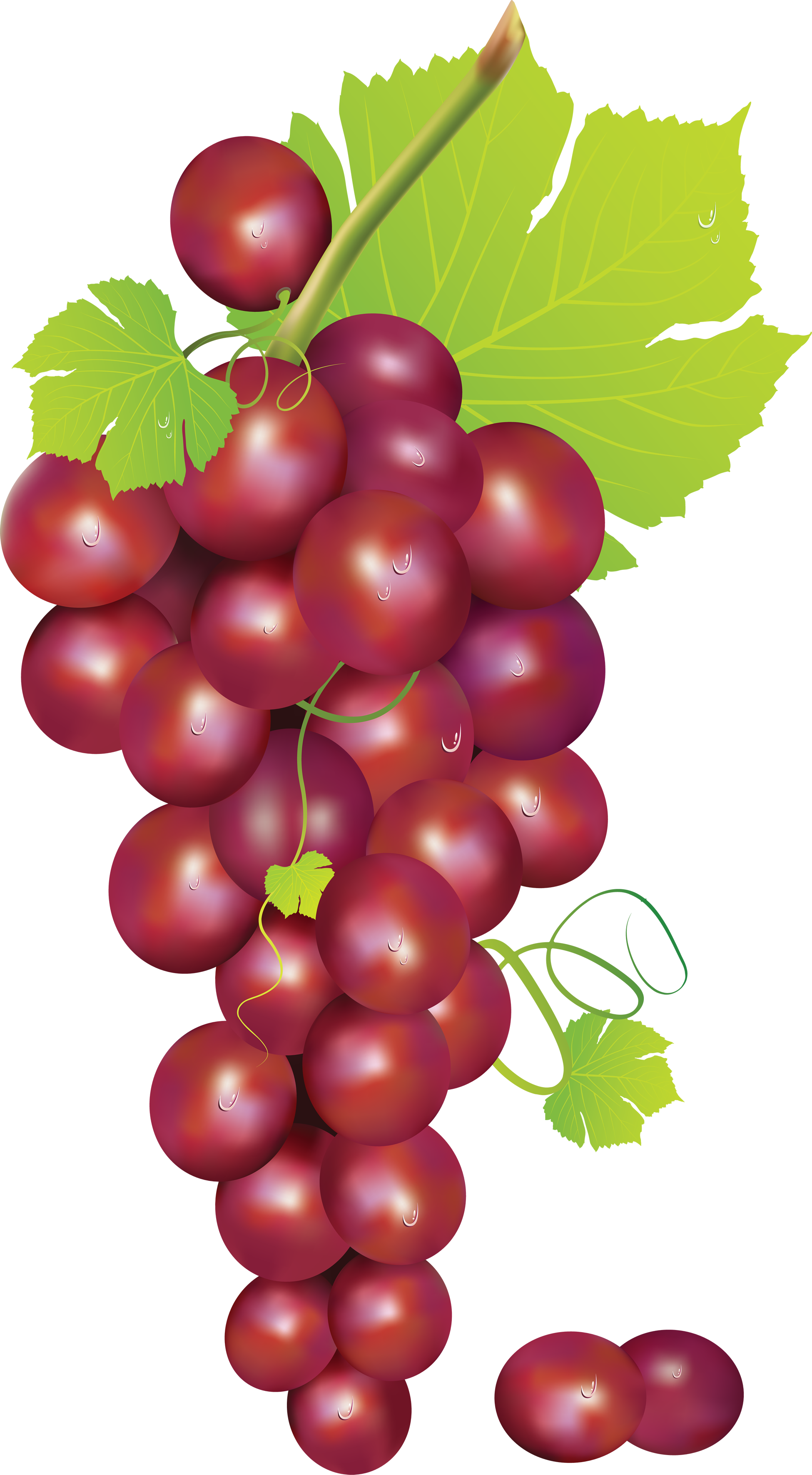 clipart freeuse Grape clipart greps. Grapes harvest free on