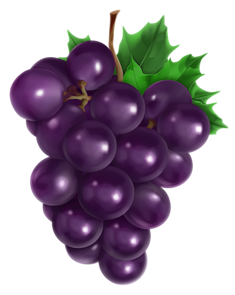 banner library stock Transparent grape png picture. Grapes clipart real purple