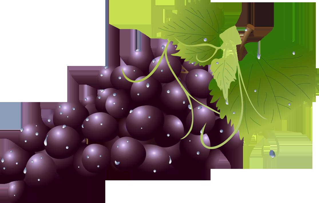 svg Pin by jadwiga on. Grape clipart illustration