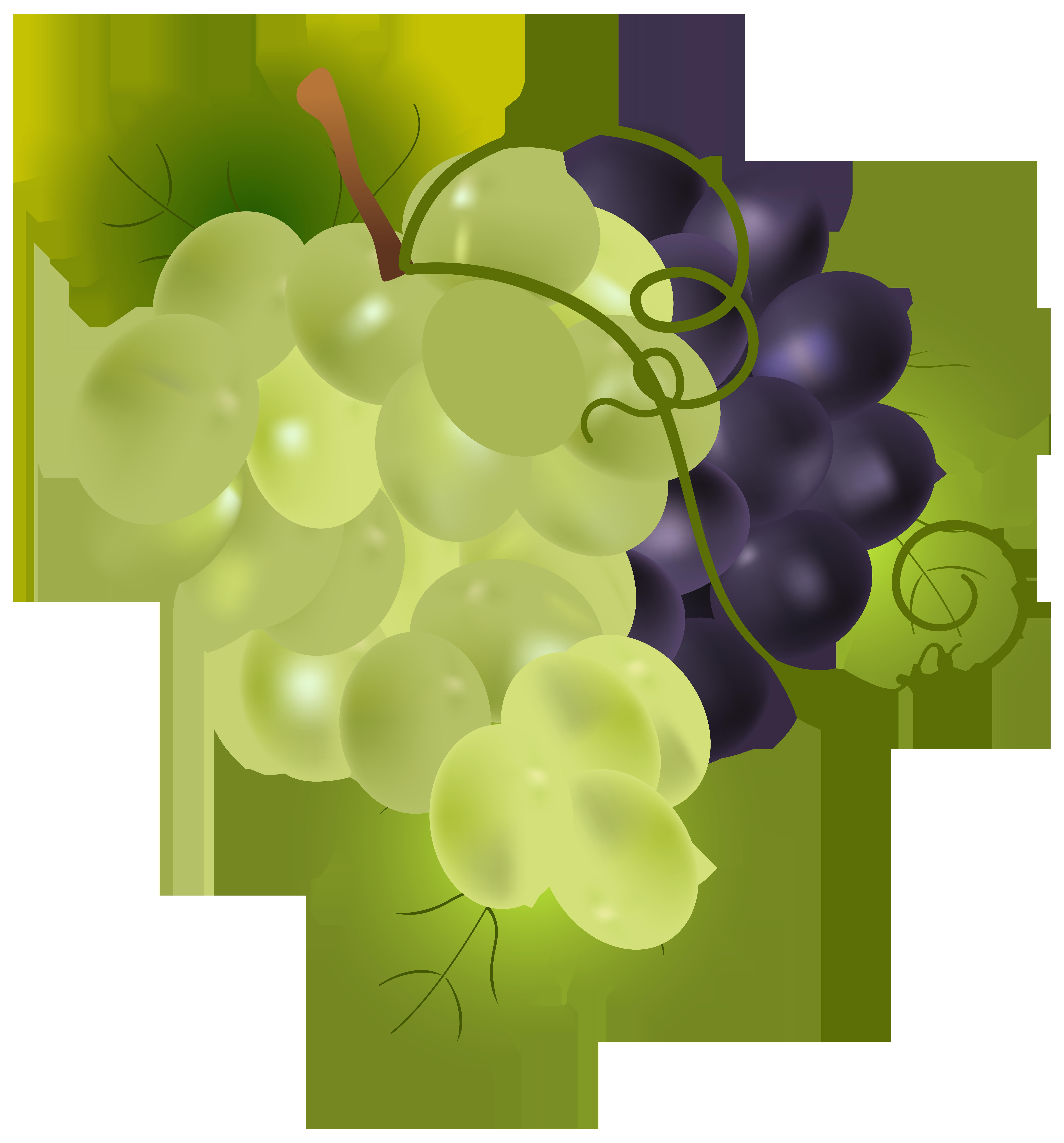 clip stock Grapes png clip art. Grape clipart illustration