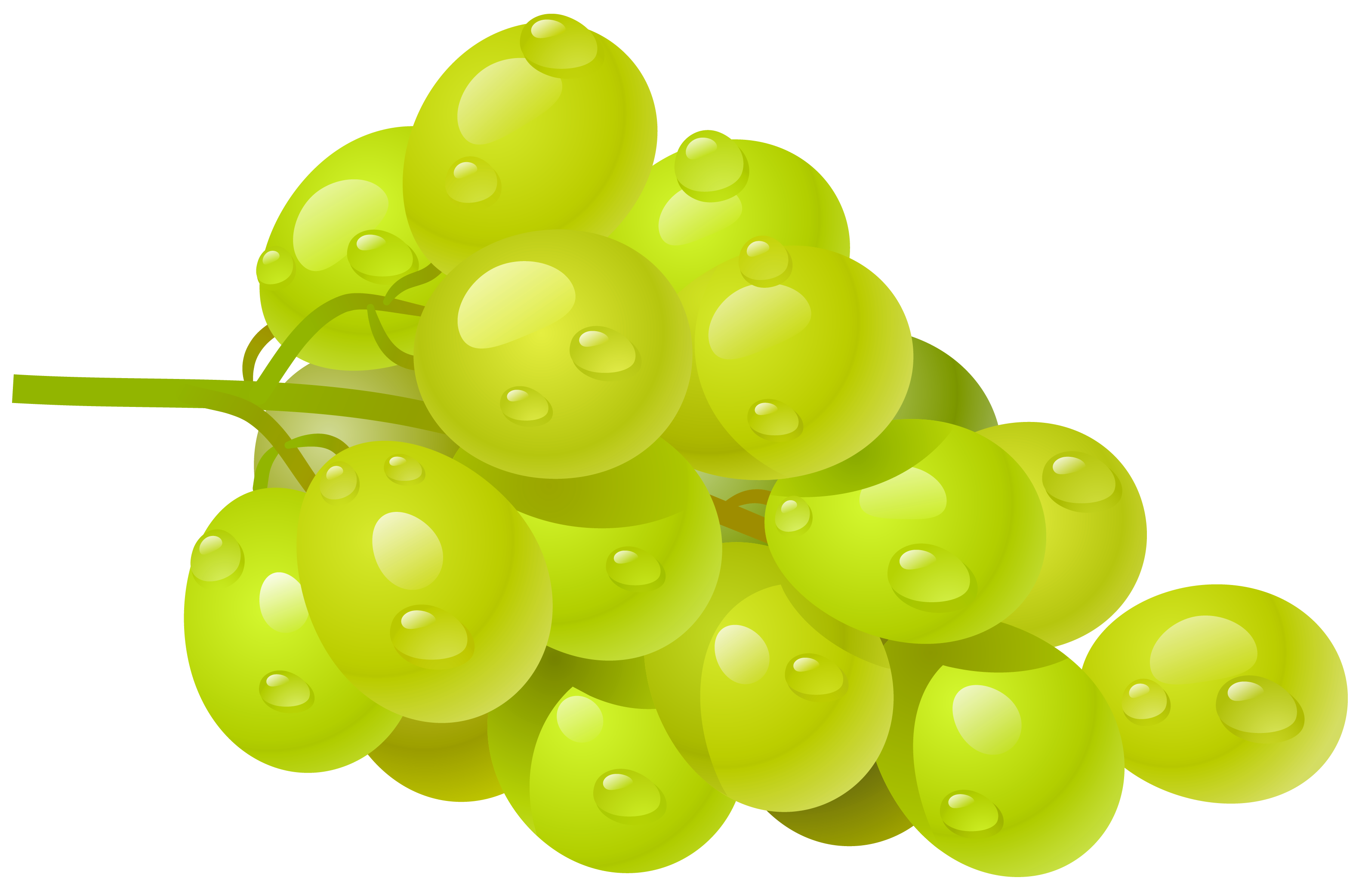 jpg White grape png picture. Grapes clipart autumn fruit