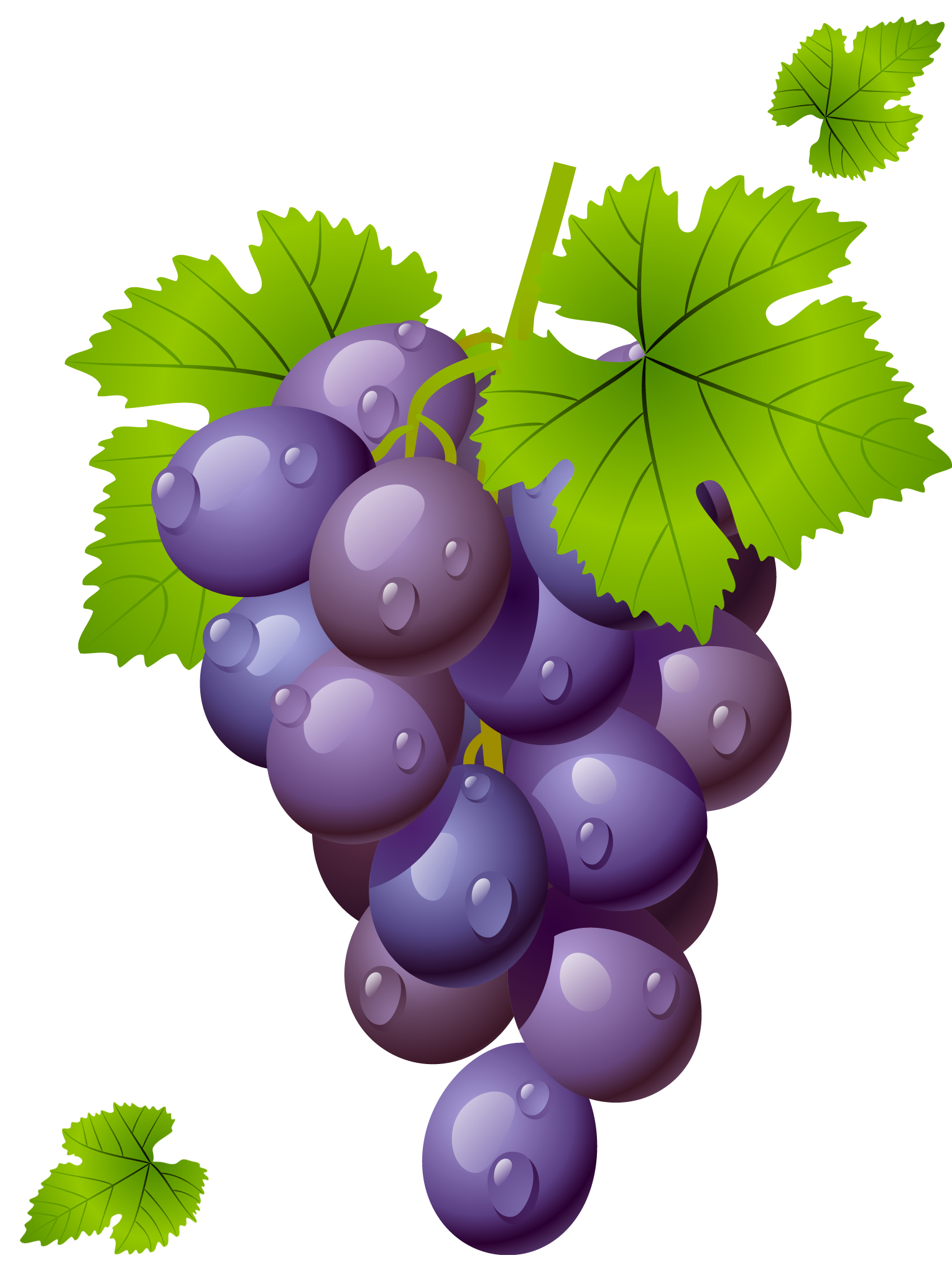 image Grape clipart. With leaves png picture