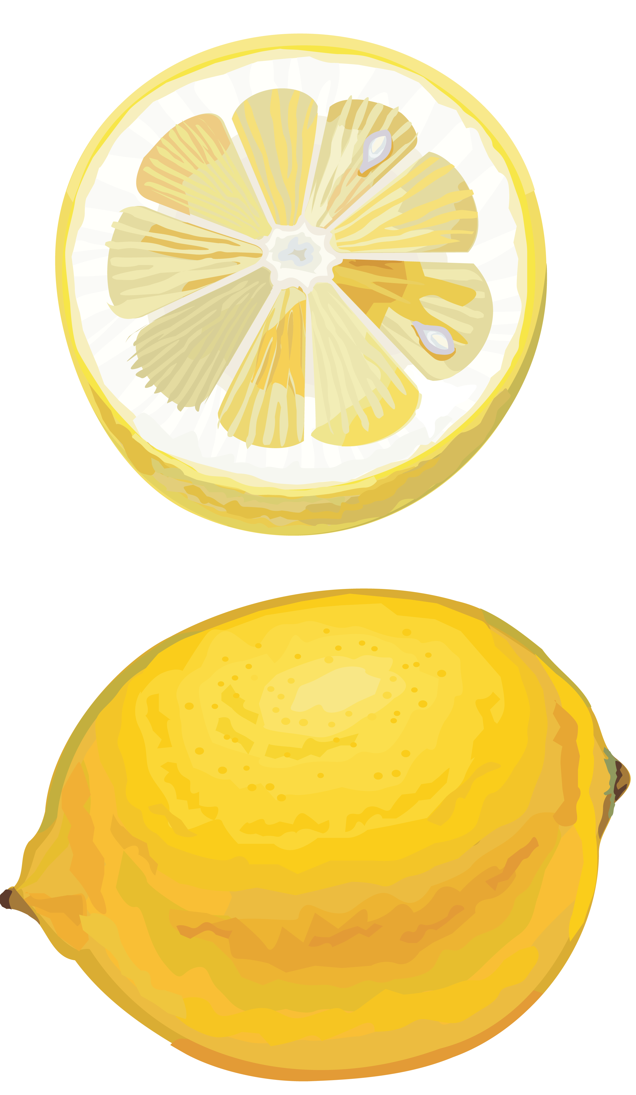 picture library download Lemon drawing cut PNG Image