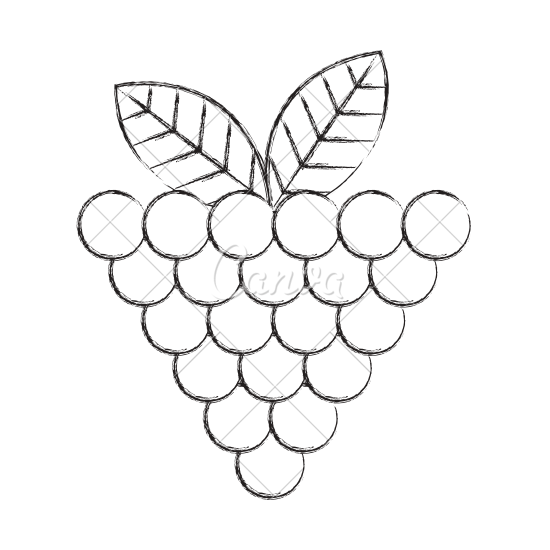picture library stock Grapes clipart black and white. Grape drawing at getdrawings