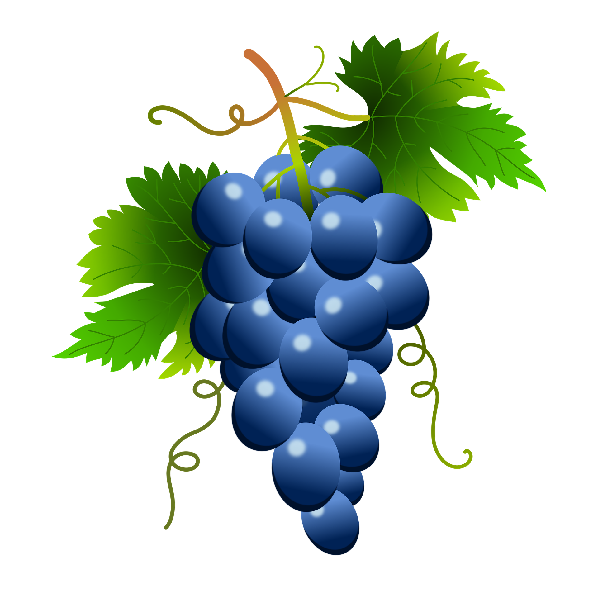 picture freeuse download Free on dumielauxepices net. Grapes clipart blue grape