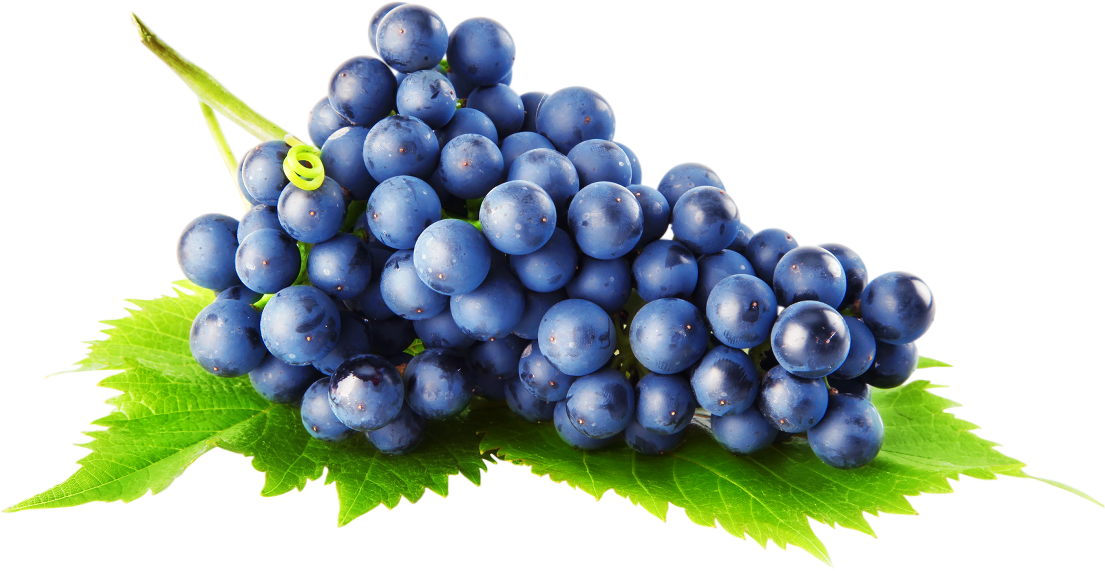jpg transparent library Grapes clipart blue grape. Png image purepng free