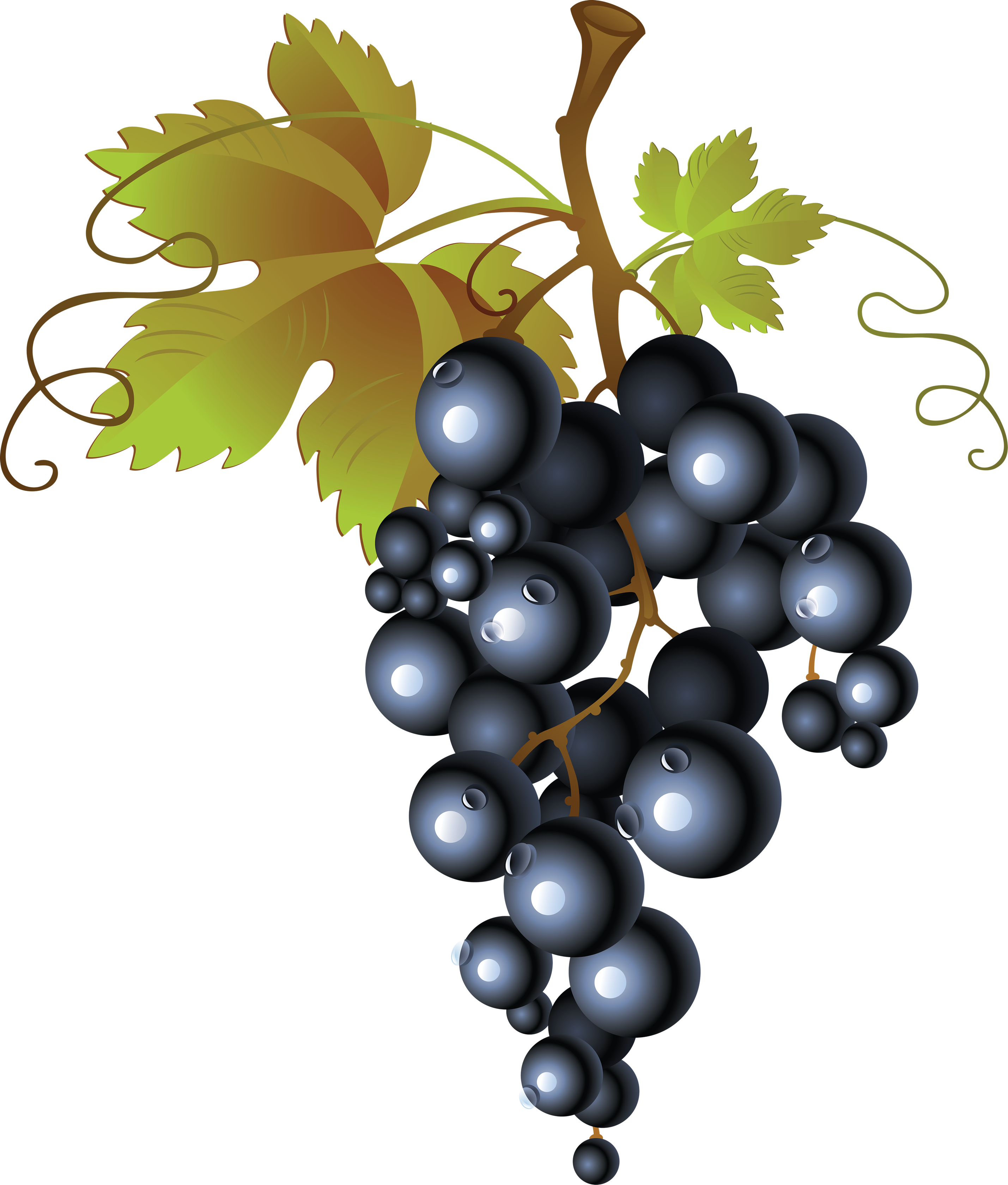 svg royalty free Grape fifty three isolated. Grapes clipart bread