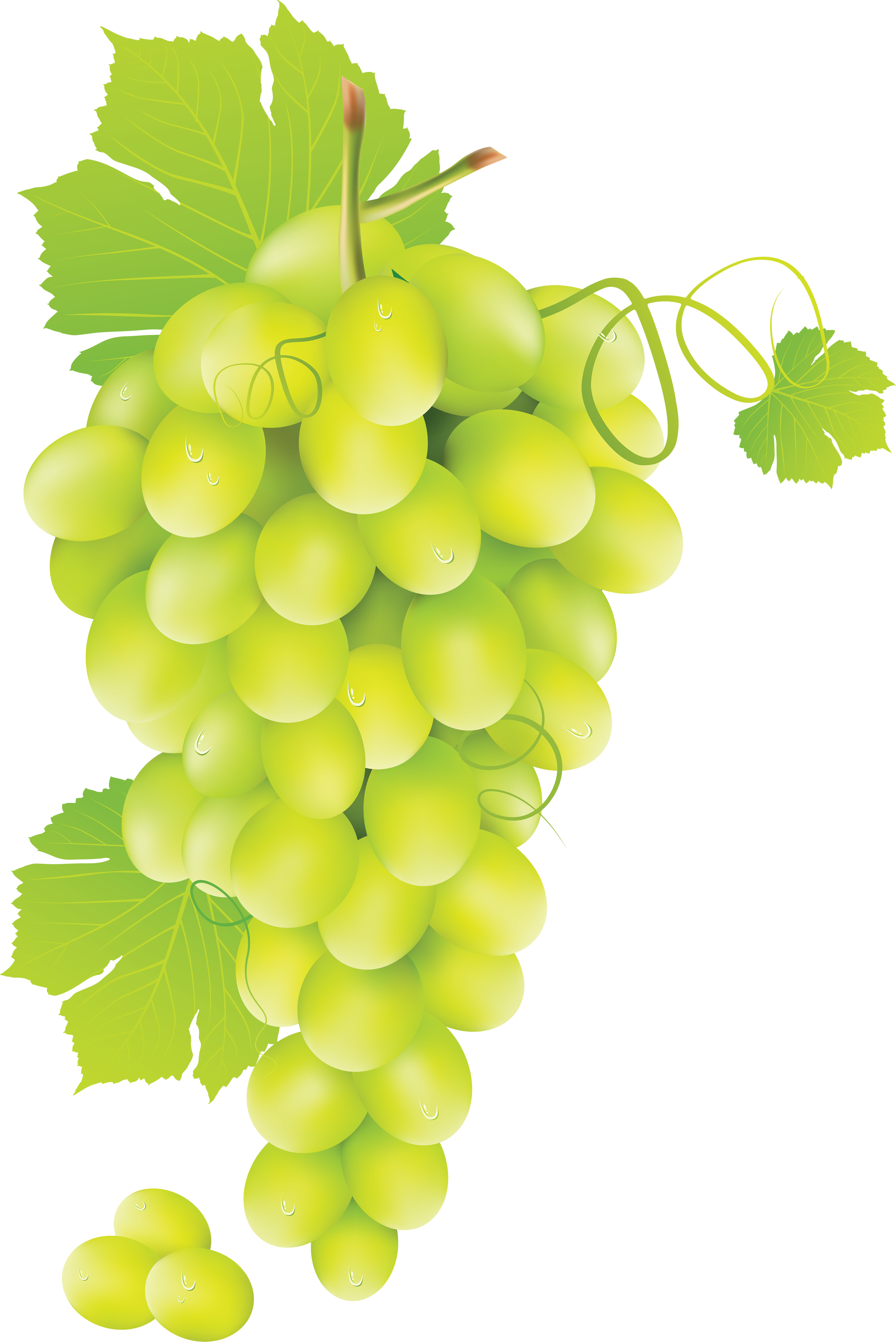 svg library download Grapes clipart bread. Grape twelve isolated stock
