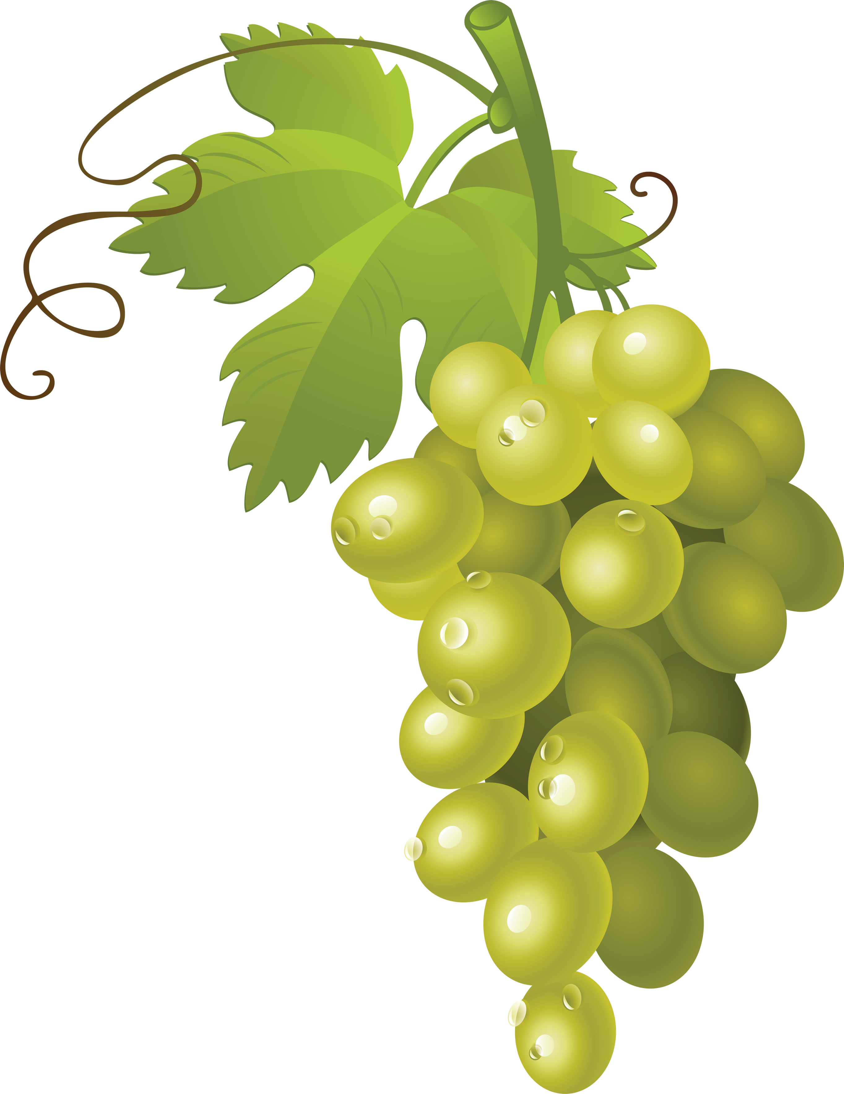 jpg stock Grapes clipart grape cluster. Thirteen isolated stock photo