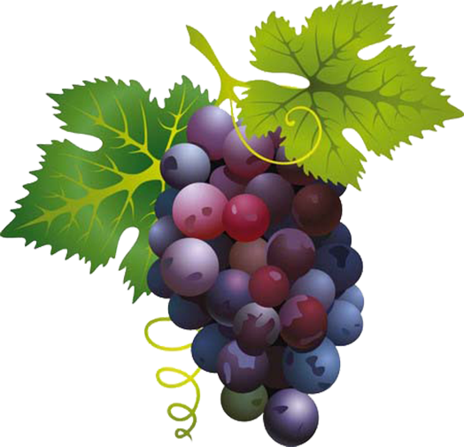 svg library Pin by jadwiga on. Grapes clipart grape cluster