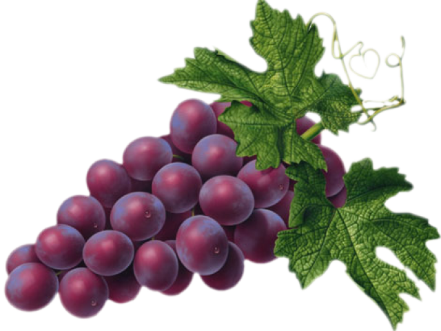 png library library Grapes clipart real purple. Free on dumielauxepices net