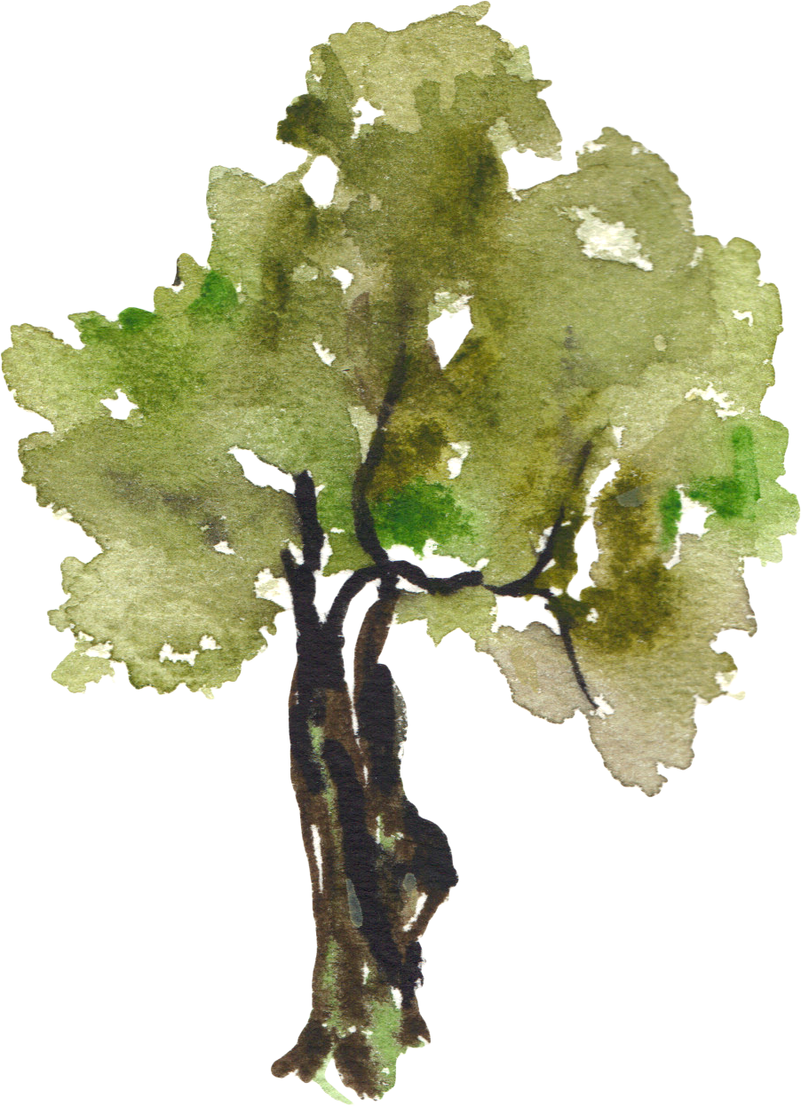 image stock Grapes clipart watercolor. Tree painting clip art