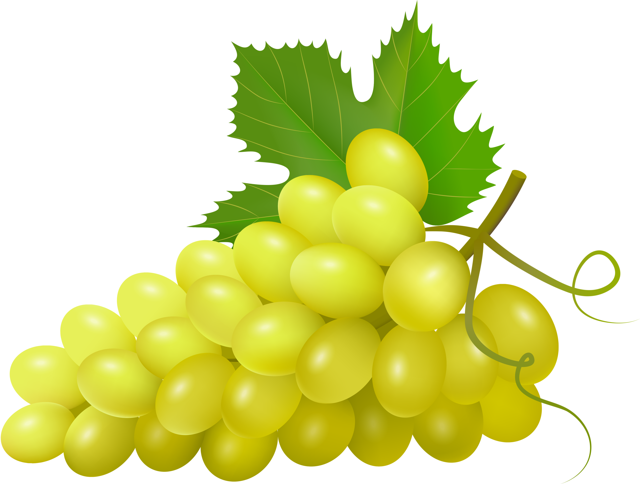 graphic library download  png pinterest clip. Grapevine clipart wheat