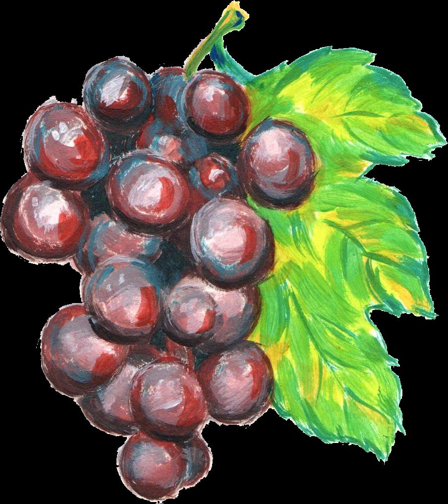 png  grape paint fruit. Grapes clipart watercolor