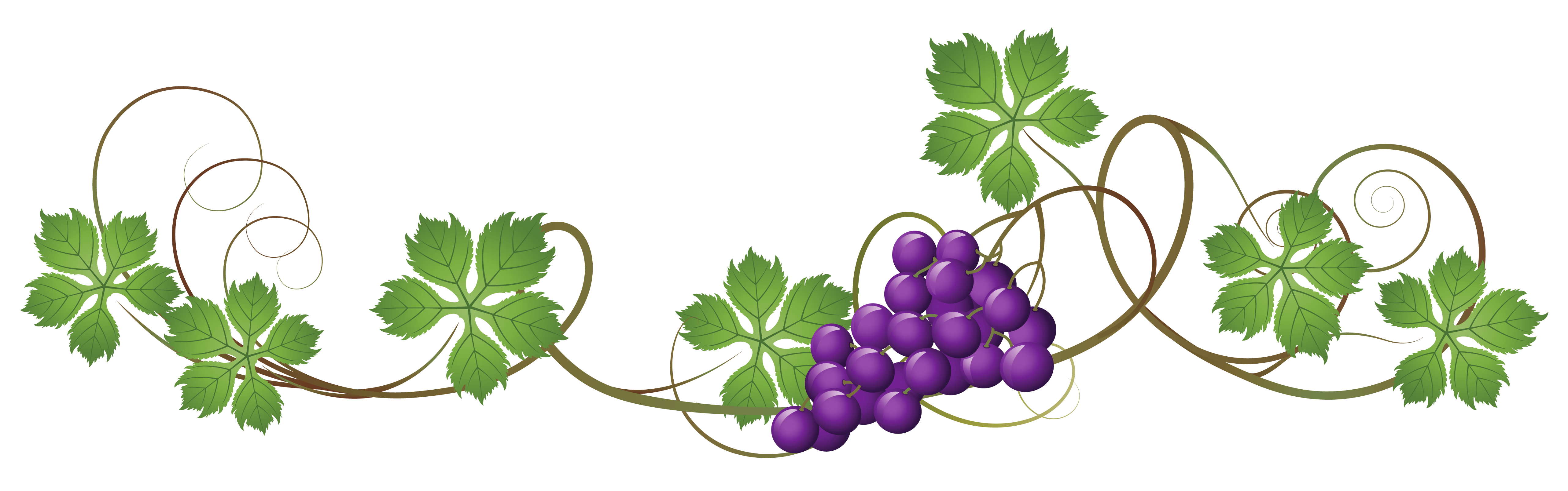 banner download Grapevine clipart.  collection of grape