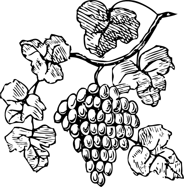 svg transparent stock Grapevine clipart. Grape vine clip art