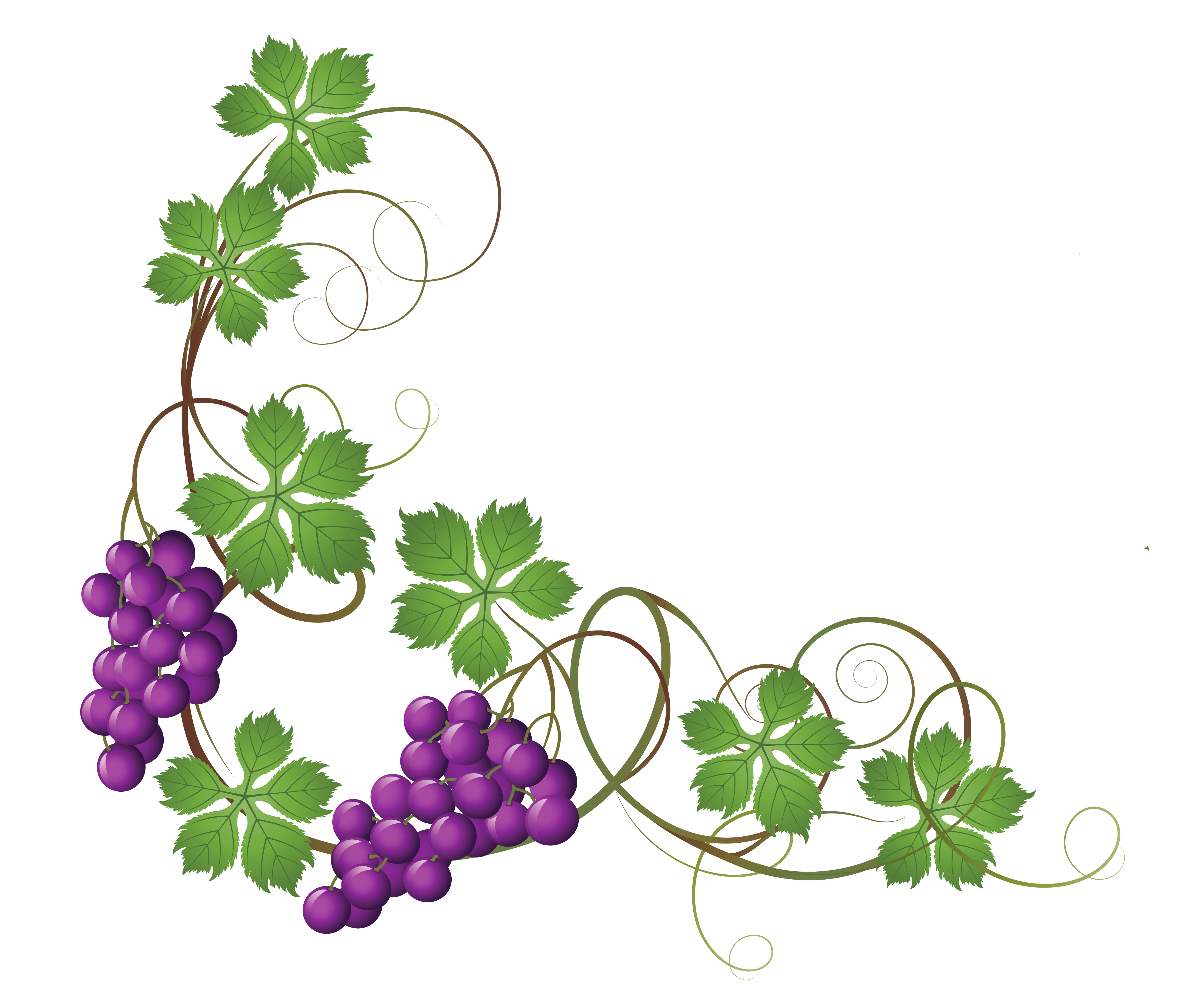 png library stock Grape clipart printable. Free grapevine transparentvinedecorationpngclipartpicturepng