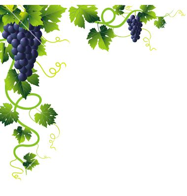 free stock Grapevine clipart artwork. Grape vines vector by
