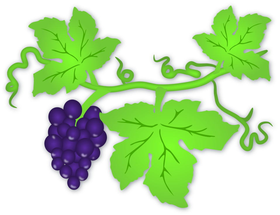 png royalty free stock Grapevine clipart artwork. Public domain clip art