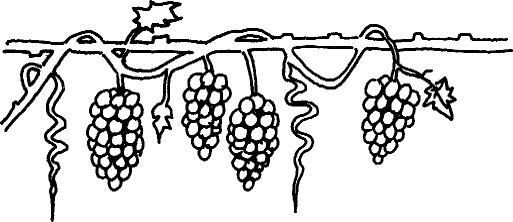image freeuse stock Grapevine clipart artwork. Look at clip art